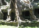 Angkor Wat (233)