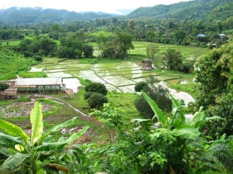 Chiang Mai (237)