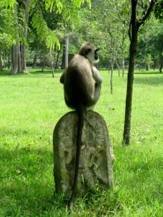 Anudharapura (11)