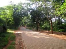 Auroville (11)