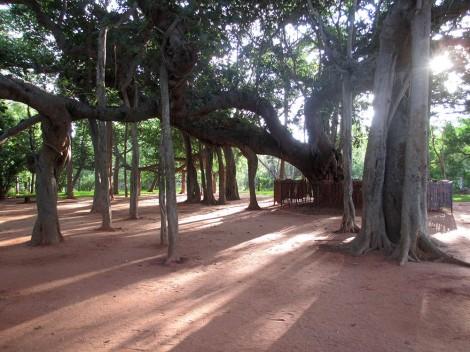 Auroville (15)