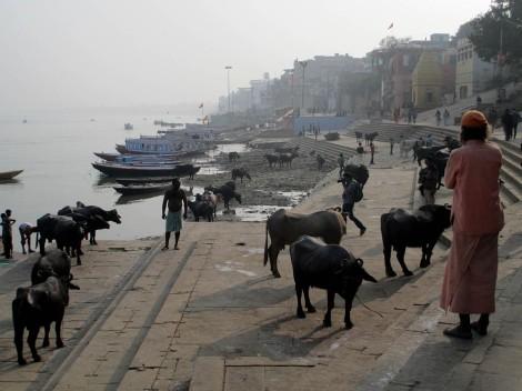 Varanasi (41)