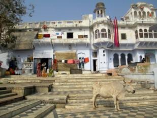 Pushkar (38)