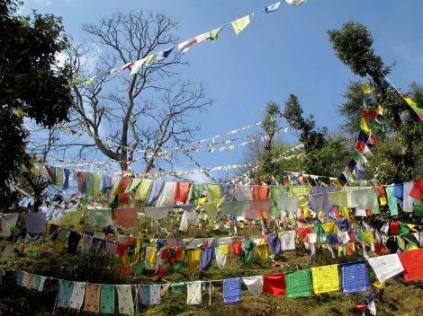 Dharamsala (78)