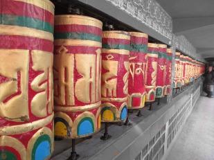 Dharamsala (8)