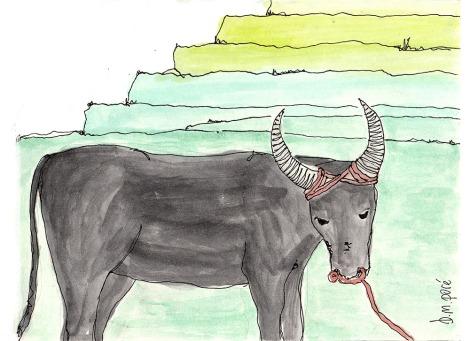 Dibujo Filipinas - Bufalo