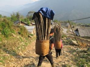 Hau Thao (108)