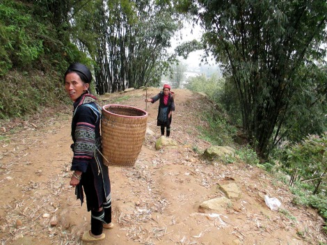 Hau Thao (209)