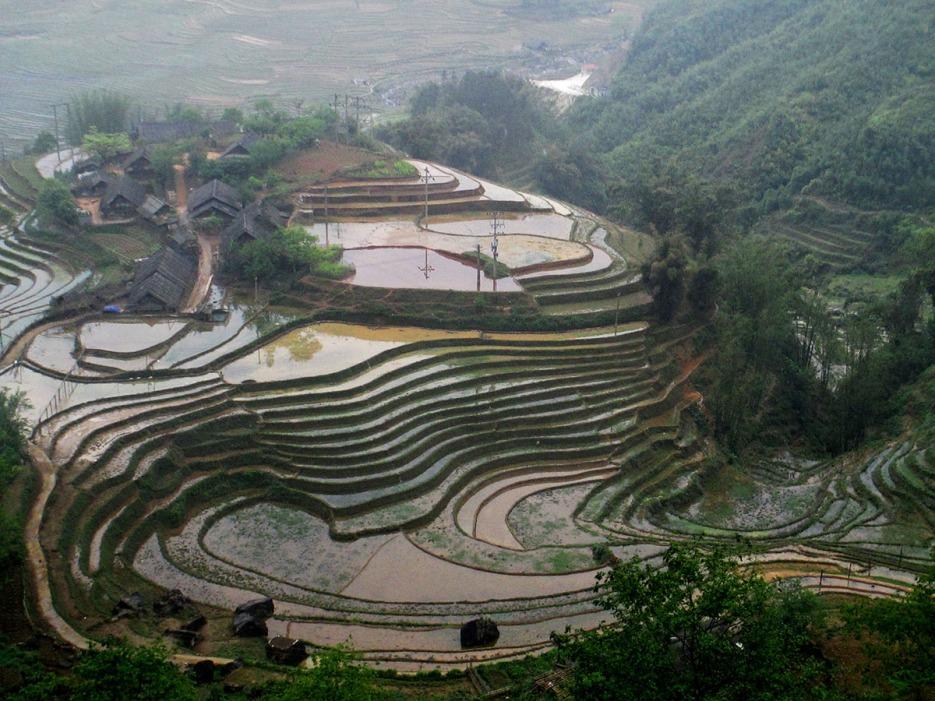 Hau Thao (264)
