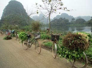 Ninh Binh (154)