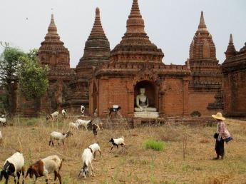 Bagan (18)