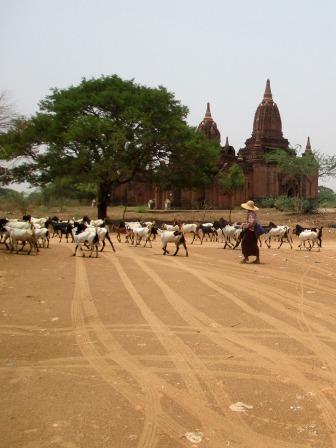 Bagan (93)