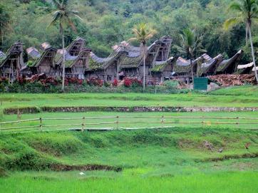Tana Toraja (295)