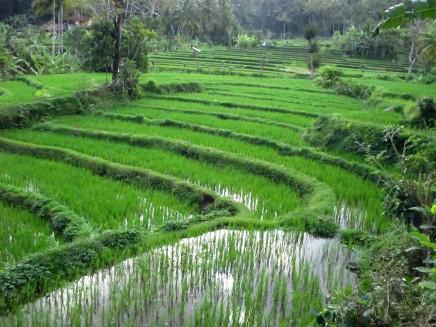 Bali (60)