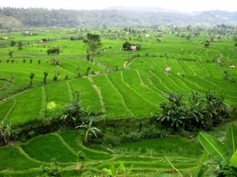 Bali (79)