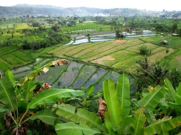 Bali (81)