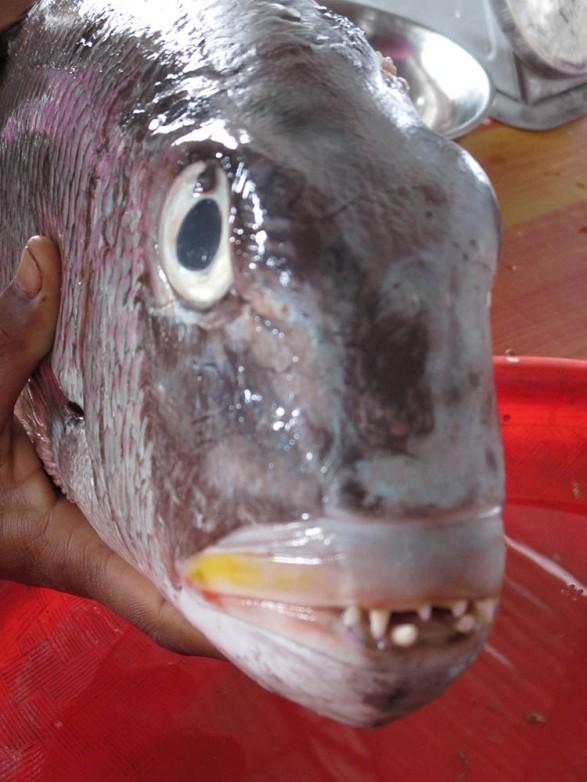 Labuambajo (33)