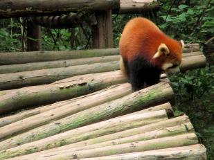 Panda (75)
