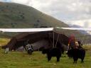 Tagong (125)