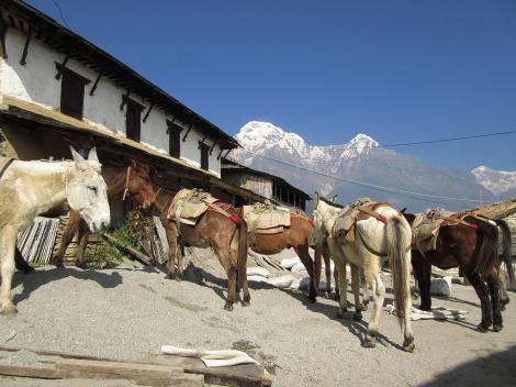 Annapurnas (211)
