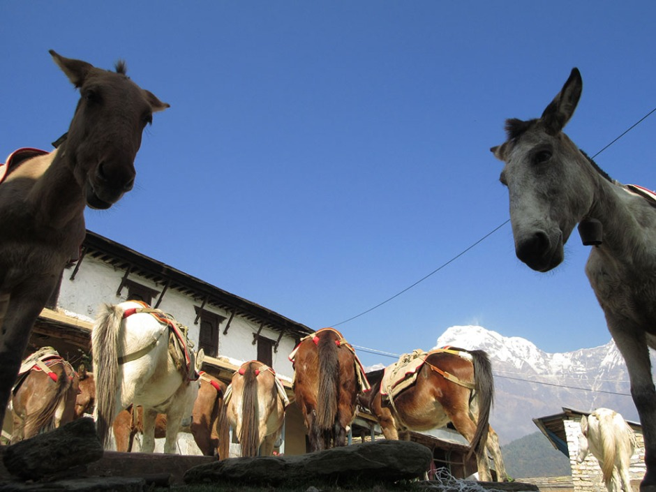 Annapurnas (215)