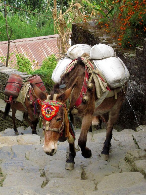 Annapurnas (230)
