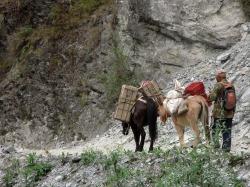 Annapurnas (9)