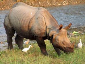 Chitwan (103)