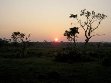 Chitwan (111)