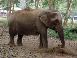 Chitwan (47)