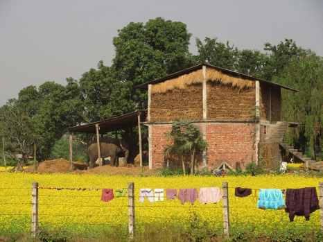 Chitwan (54)
