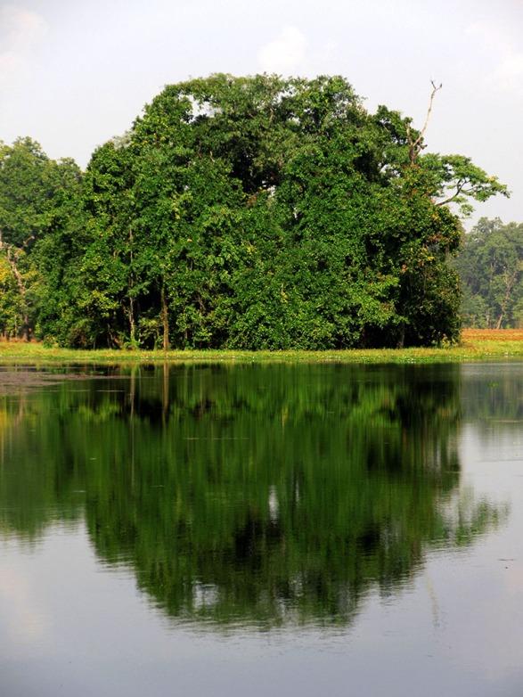 Chitwan (66)