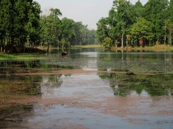 Chitwan (71)