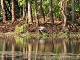 Chitwan (72)