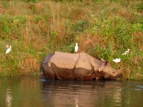 Chitwan (88)