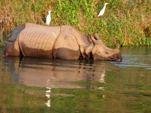Chitwan (92)