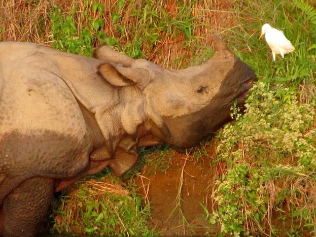 Chitwan (96)