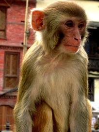 Swayabunath (55)
